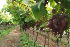 ZEWS acude en respaldo de proyecto de Agricultura 4 0 en Perú